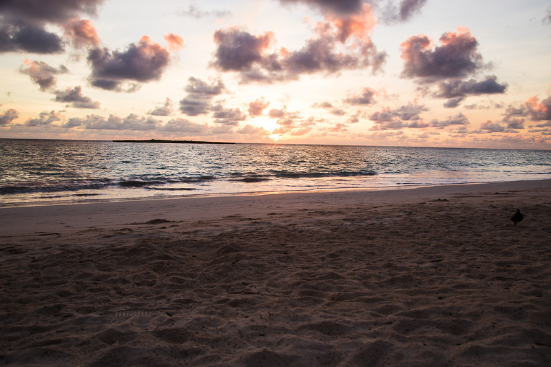 Hawaii 2018 reg cam-8280.jpg