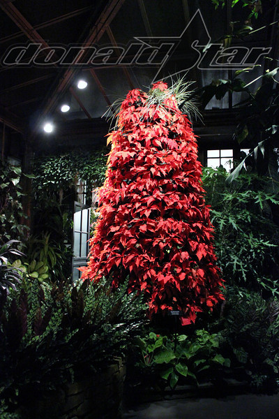 Longwood Gardens 2012-01-06 160.JPG
