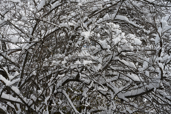 walk in the snow with oscar