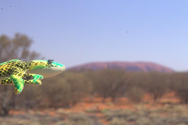 Sammy in profile with Uluru.