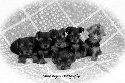 I Want my Mommy by Lorna Rogers Photography