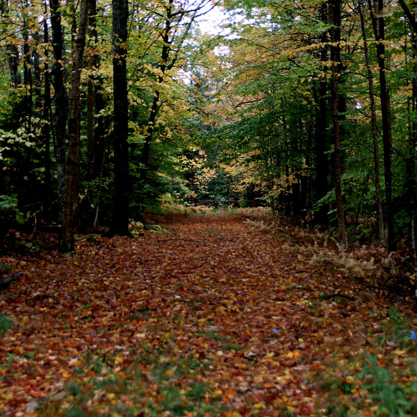 2020 9-30 Foliage