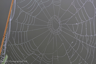 The webs we weave.