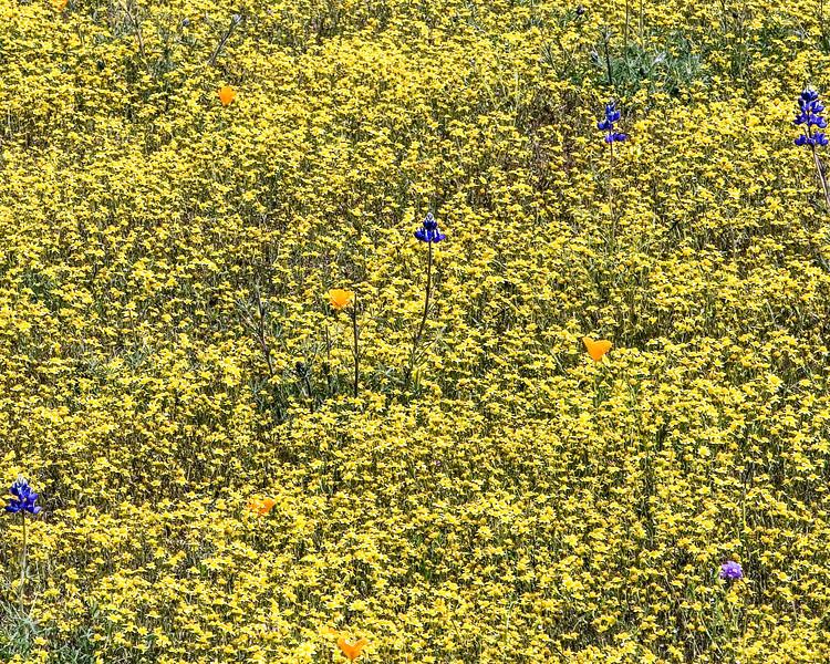 Flower30.jpg