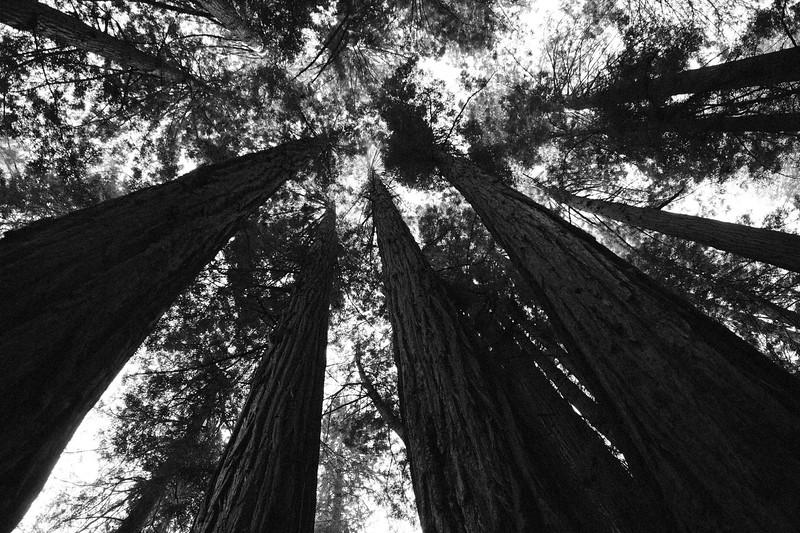 Forest_City_Photographs_Honeymoon_Califonia_San_francisco_Yosimite-39.jpg
