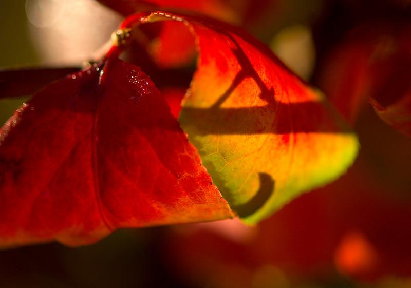 leaf6387.jpg