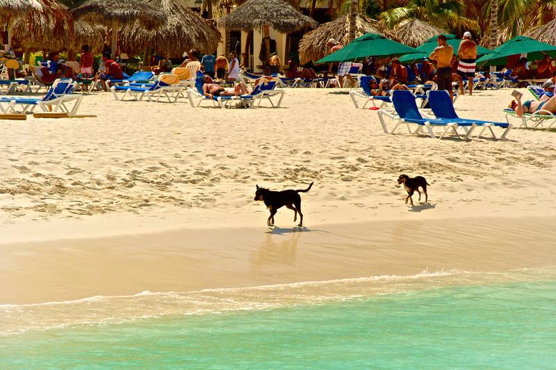 Aruba2013 (36).jpg