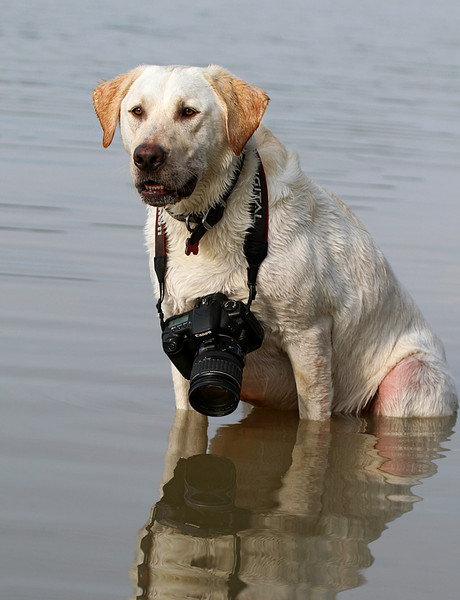 Labrador Photographer.jpg