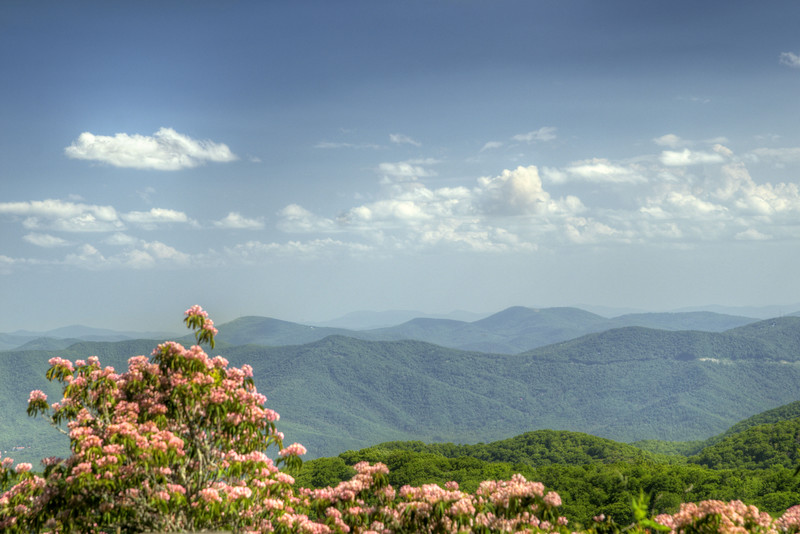 A few blooming rhododendron bushes at Craggy Gardens at Milepost 264.4 on the Blue Ridge Parkway in North Carolina on Monday, June 15, 2015. Copyright 2015 Jason Barnette