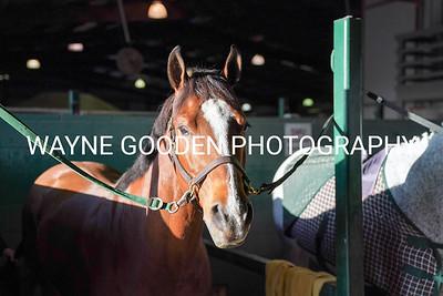 SMU Equestrian Vs TCU  February 29 2020
