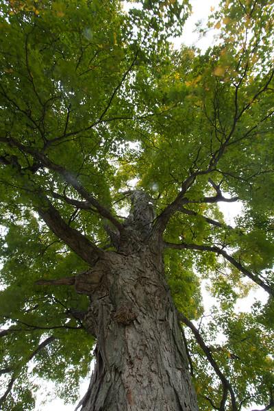 Kay's Tree