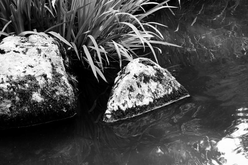 070811-047BW (Abstract; Grasses, Rocks, Water).jpg
