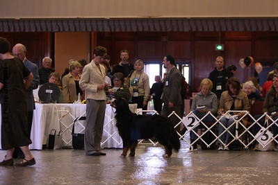 Best Versatility Dog-BMDCA 2009