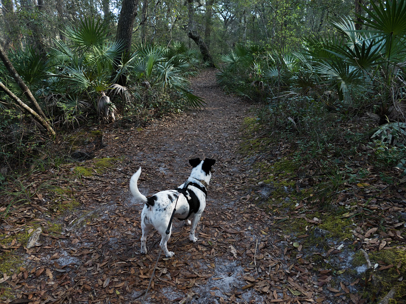 02-21--2019 Oleno River Trail (7 of 28).jpg