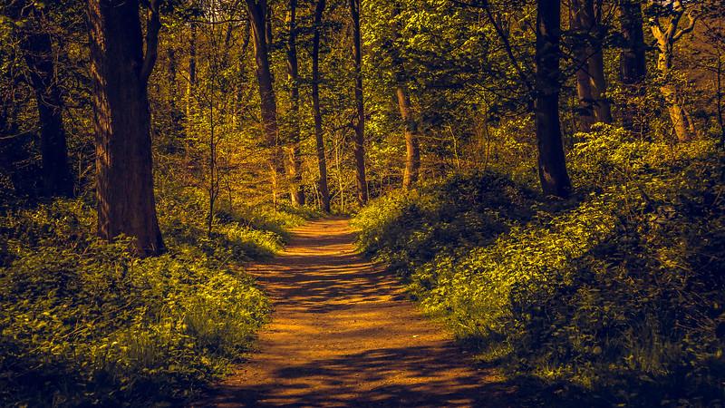 Forest Shadows-130.jpg