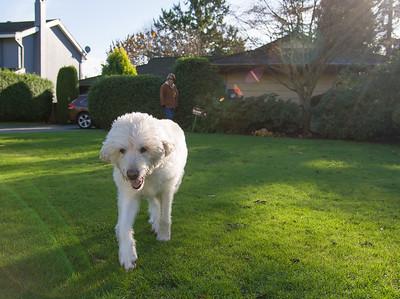 Nellie in her Yard