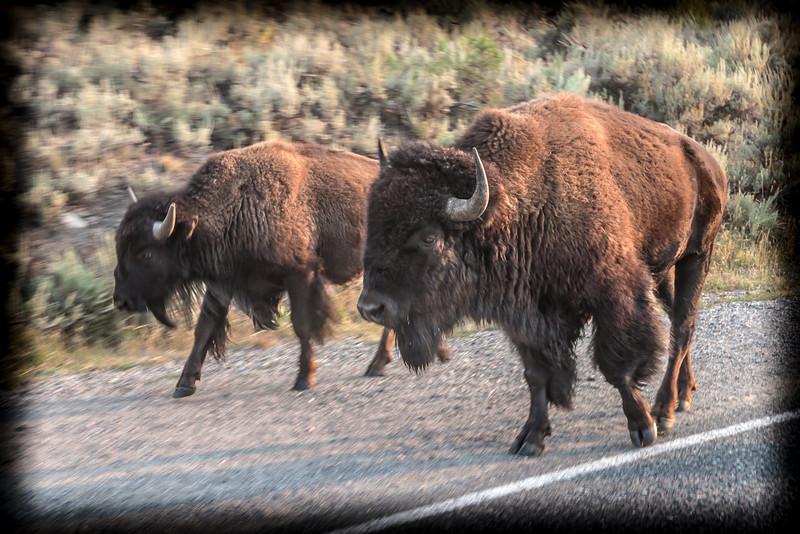 Yellowstone-8853.jpg