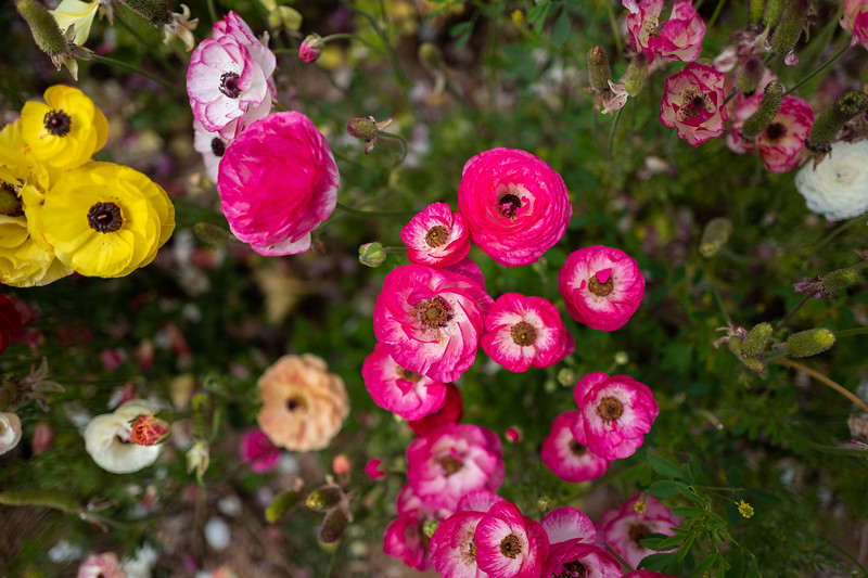 Spring Flowers A-214.jpg