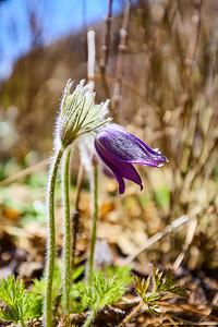 Střípky jara – Lipno nad Vltavou | Snippets of spring – Lipno nad Vltavou