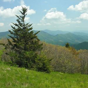 North Carolina Landscapes