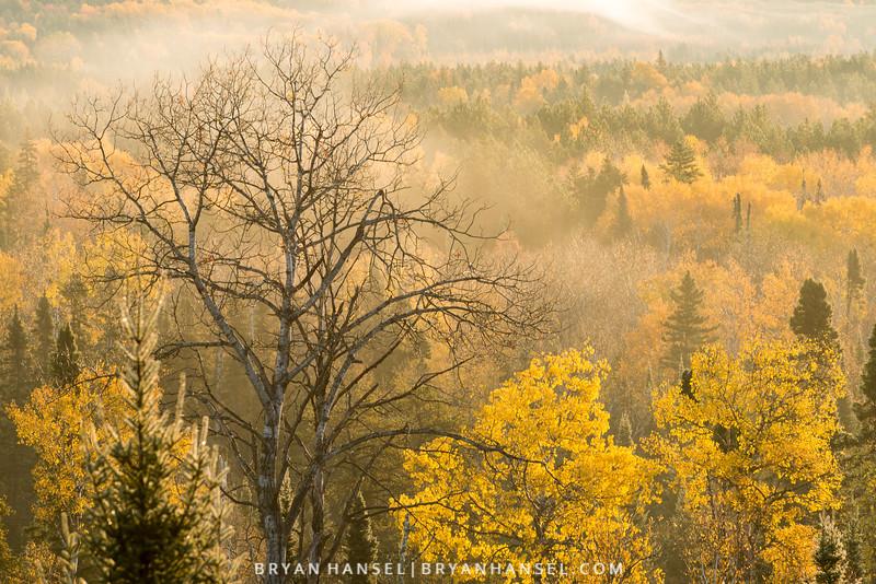 Yellow, Fog, Sunrise