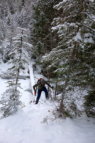 Scott skied over the log bridge