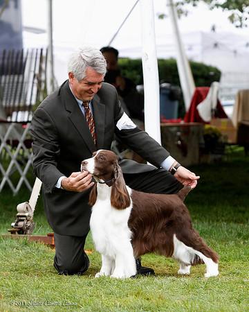 Veterans 9-11 Dogs