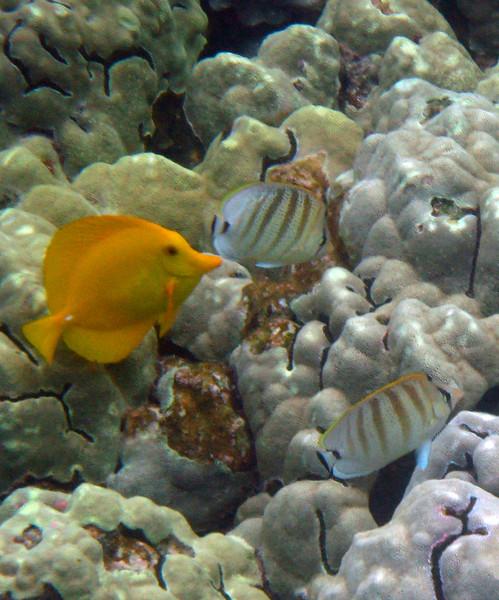 490- 20080416- Hawaii 20-Snorkelling IMG_0715.jpg