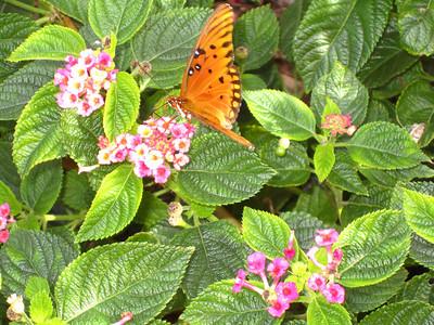 Brookgreen Gardens--Pat's pics 11/17/09
