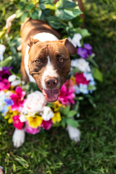 Daisy4-20-2063.jpg