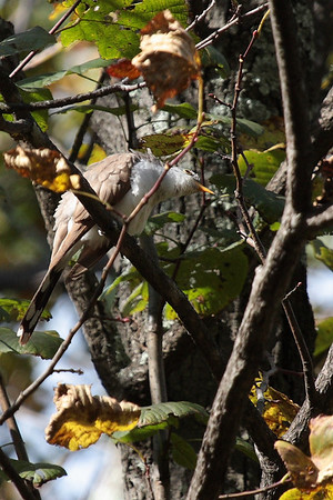 Birds & Bugs Shenandoah Nat'l Park 10/11/09