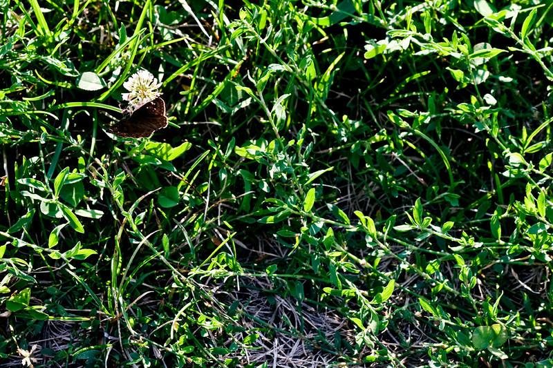 cllip-015-butterfly-wdsm-22aug11-0188.jpg