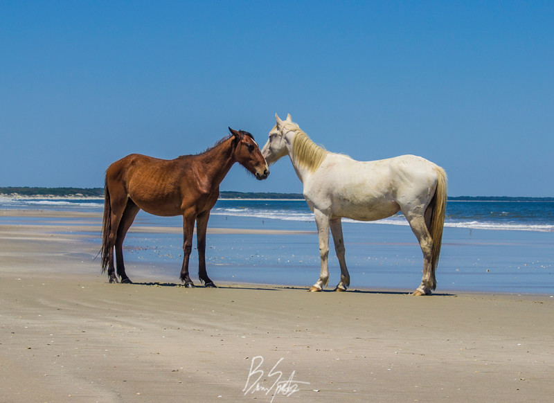beach horses.jpg