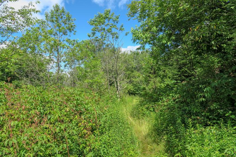 Buckeye Gap Trail -- 5,450'