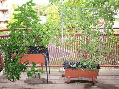 Garden Watch - Sept 2011