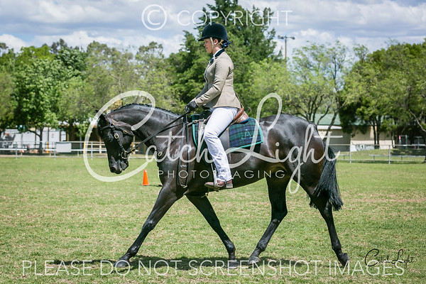 421 Novice Hack Rider 13-18yrs