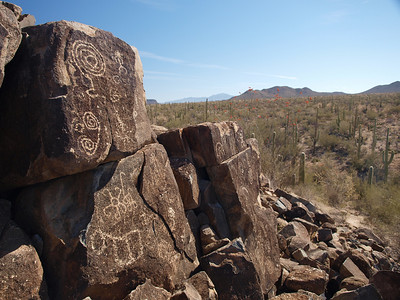 Saguaro National Park - Cacti and Petroglyphs  4.2.11
