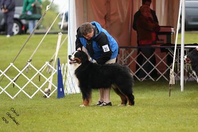9-12 mos Puppy Dog BMDCA 2010