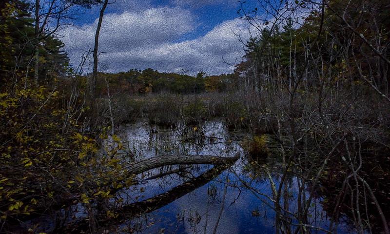 broadmoor wildlife sanctuary_02.jpg