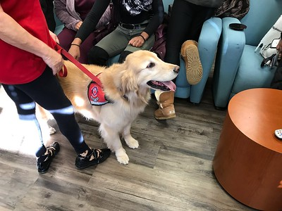 2018 Therapy Dogs
