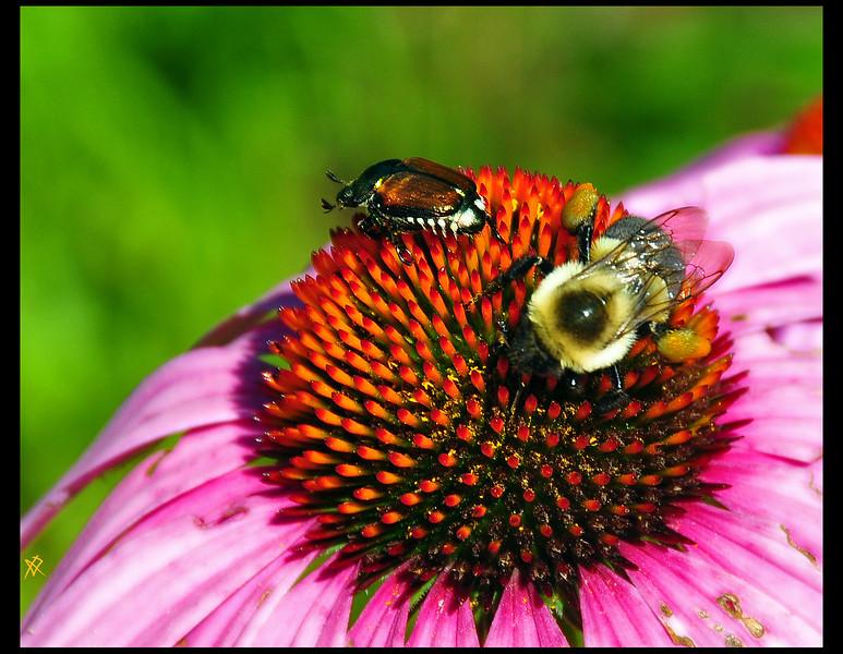 BeeBeetle.jpg