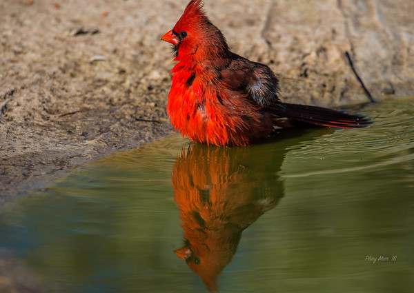 Cardinal reflection_DWL4018.jpg