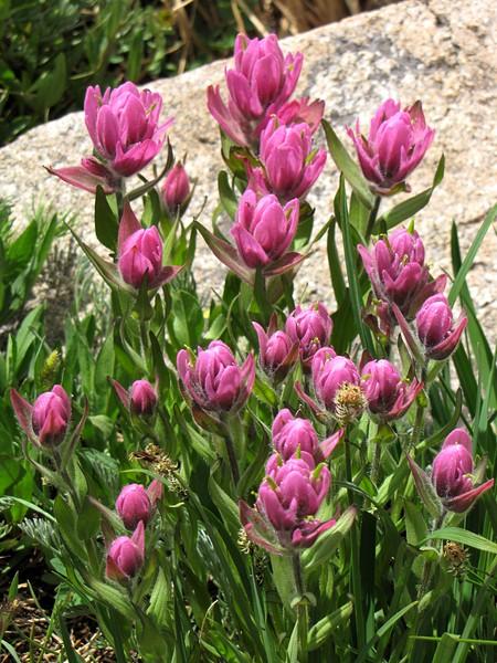 amh FLOWERS (1173).jpg