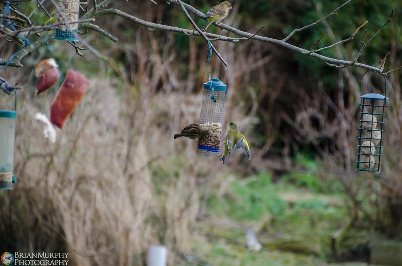 Birds 050218-5.jpg