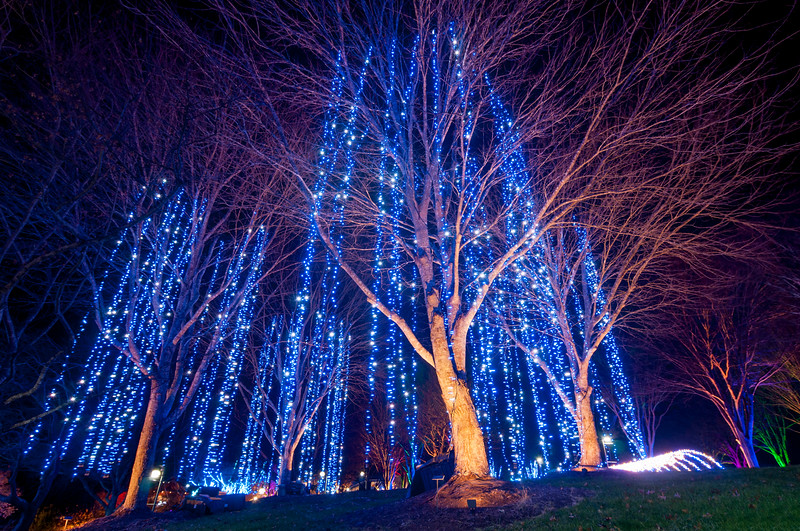 Winter Lights in {city}, {state}
