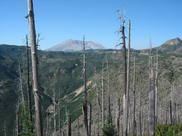 Mount St Hellens (Washington) from the edge of the blast zone.