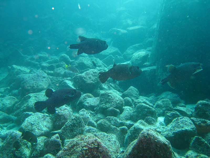 Diving in the Galapagos (130 of 392)
