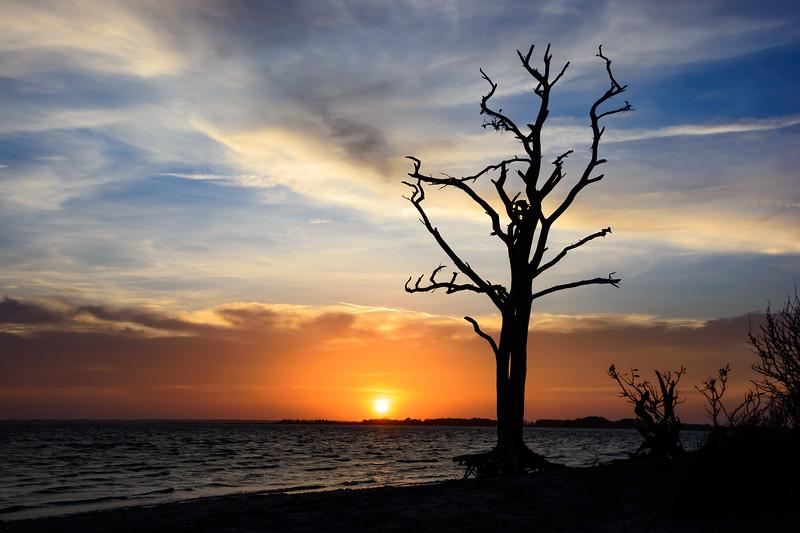 Sunset-Tree-51.jpg