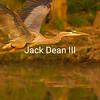 Great Blue Heron #1