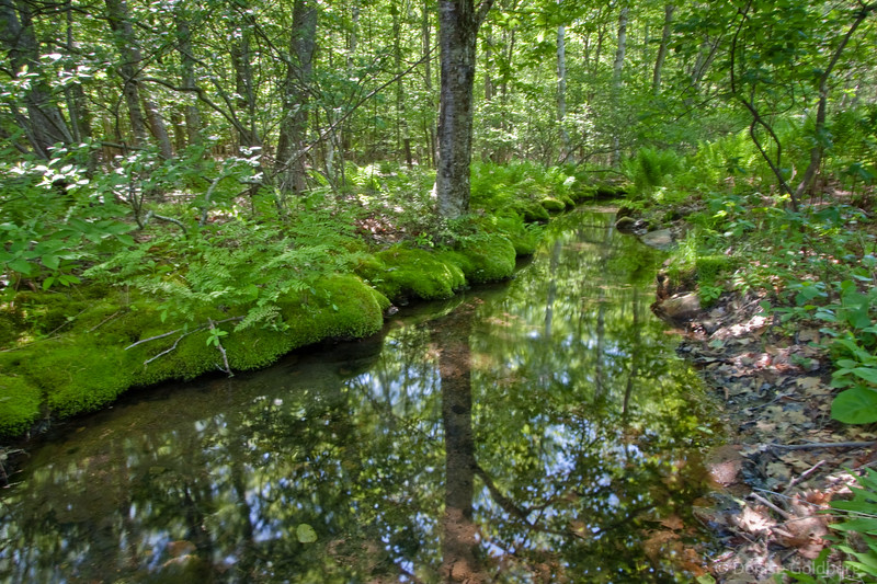 Reflections, Wild Gardens of Acadia